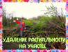 Спилить дерево в Воронеже