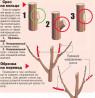Обрезка плодовых деревьев Воронеж и опрыскивание деревьев Воронежской области