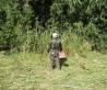 Косить траву в Ямном, покос травы Ямное